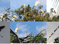ব্যবসায়ির বাড়ির আঙ্গিনার গাছগাছালি বন্যপাখিদের অভয় অরণ্যে পরিণিত হয়েছে